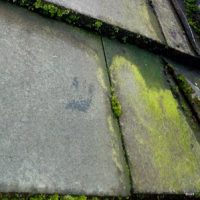 Algae- Roofing Maintenance