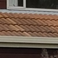 Mould and Black Algae - Roofing Maintenance