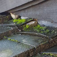 Moss - Roofing Maintenance